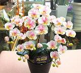 胡蝶蘭3本立て 光触媒【造花】k3-2sミディピンク