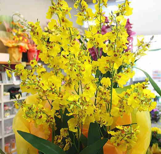 光触媒オンシジューム6本立て【造花】洋蘭 オンシジューム鉢植え 本物そっくりの光触媒加工された造花。開店・開院・開業などのお祝いや退職・昇進祝いと用途もいろいろ。【お供え】【オープン祝い】