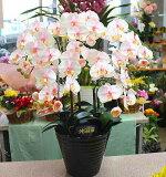 光触媒 胡蝶蘭 【造花】k5-10M淡いピンク5本立て