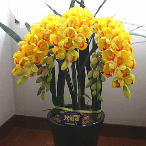 シンピジューム 黄色 5本立ち Sサイズ 光触媒【造花】本物そっくり 花 ギフト 本物そっくりなシンピジュームの造花(空気清浄の光触媒加工)華やかな黄色のシンピジュームはアーチ型で豪華です。お店や事務所・病院などのお祝いにおすすめです。
