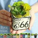 ボタニカルSS アレンジ 豊富なカラー!選べる3パターン12種類♪多肉植物 エアープランツ 造花 グリーン 手入れ不要で一生持つ♪のアーティフィシャルフラワー 癒しのインテリア エケベリア グリーンネックレス ティランジア
