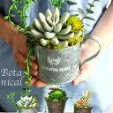 送料無料ボタニカルS アレンジ 多肉植物 エアープランツ 造花 グリーン 手入れ不要で一生持つ♪のアーティフィシャルフラワー 癒しのインテリア エケベリア グリーンネックレス ティランジア