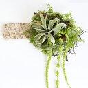 送料無料 枯れない観葉植物 写真印刷無料 ホワイトバーチ ボ...