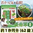 【 楽天 スーパーセール 50%オフセール 】長命草 サプリ...