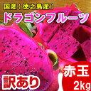 ドラゴンフルーツ ピタヤ レッドピタヤ 赤玉 赤 訳あり 2kg 国産 徳之島産 2キロ