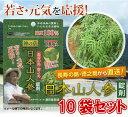 健康 サプリ エイジングケア 美容 ダイエット【送料無料】日本山人参錠剤 10袋セット(ヒュウガトウ