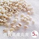 佐賀県産丸麦 5kg 手作り味噌用 無添加 国産 大麦 はだか麦 徳用 業務用 麦麹用 合わせ味噌 麦みそ原料 送料無料 あす楽