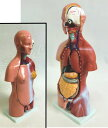 人体模型GX-204お腹の見える人体模型85cm[JK-3557] 23パーツ取り外し可【HLS_DU】