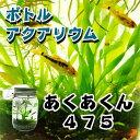 ボトルアクアリウムあくあくん475(円筒型)/生き物/ペット/熱帯魚/ボトルアクアリウム/自由研究/