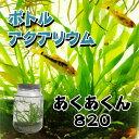 ボトルアクアリウムあくあくん820(円筒型)/生き物/ペット/熱帯魚/ボトルアクアリウム/自由研究/