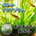ボトルアクアリウムあくあくん1265(タイコ型)/生き物/ペット/熱帯魚/ボトルアクアリウム/自由研究/