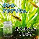 ボトルアクアリウムあくあくん1500(ワイヤーロック式、丸四角型)/生き物/ペット/熱帯魚/ボトルアクアリウム/自由研究/