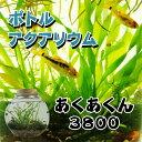 ボトルアクアリウムあくあくん3800(タイコ型)/生き物/ペット/熱帯魚/ボトルアクアリウム/自由研究/