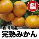 【送料無料】香川県産完熟みかん 2Lサイズ 約9kg 270...