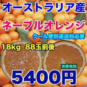 オーストラリア ネーブル オレンジ