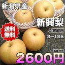 【送料無料】新潟県産新興梨 約5kg(8~18玉) ご家庭用 【RCP】