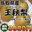 【送料無料】鳥取県産王秋梨 約5kg 赤秀クラス 【RCP】...