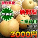 【送料無料】鳥取県産新興梨 約5kg(8〜12玉)ご贈答用 【RCP】
