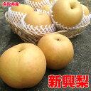 訳あり 鳥取県産 新興 梨 5kg 6~18玉 お試し 梨 なし 送料無料 お歳暮 ギフト