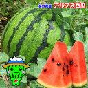 信州 長野県産 アルプス 西瓜 6〜7.5kg 訳あり ご家...