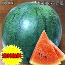 鳥取県産 大栄 黒小玉 西瓜 2.5kg 送料無料 鳥取県 ...