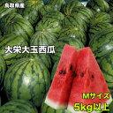 訳あり 鳥取県産 大栄西瓜 Mサイズ 5kg以上 ご家庭用 ...