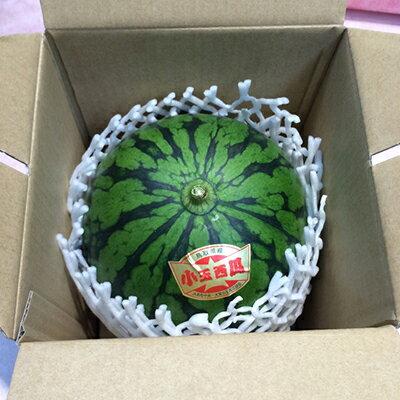 【送料無料】鳥取県産大栄小玉西瓜 約2.5kg...の紹介画像3