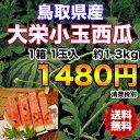 【送料無料】鳥取県産大栄小玉西瓜 約1.3kg 【RCP】※沖縄県離島へは別途送料必要