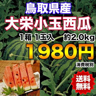 【送料無料】鳥取県産大栄小玉西瓜 約2.0kg 【RCP】※北海道・沖縄県離島へは別途送料必要