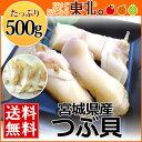 宮城県産お刺身用つぶ貝500g/送料無料/つぶ貝/ツブ/お刺身/調理用