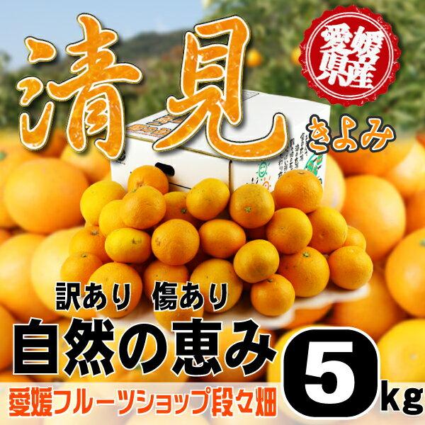 愛媛県産 清見 自然の恵み(傷あり・訳あり)5kg