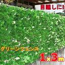 まとめ買い用目隠しグリーンフェンス 1m
