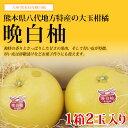 【送料無料】熊本県産 晩白柚(バンペイユ)1箱2玉入り お歳暮