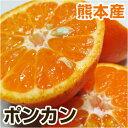 ■熊本県産 ポンカン■ 700g〜1kg 【野菜セットと同梱で