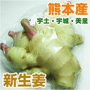 ■ 熊本県産 新生姜 約100g ■ 【 野菜セットと同梱で送料無料 九州 熊本 野菜 ショウガ