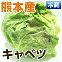■熊本県産 キャベツ■ (熊本八代・山都産)  1玉 【