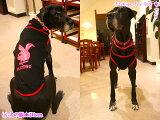PLAYDOG★タンクトップ(大型犬用)【犬服2点購入でメール便】犬の服 ドッグウェア