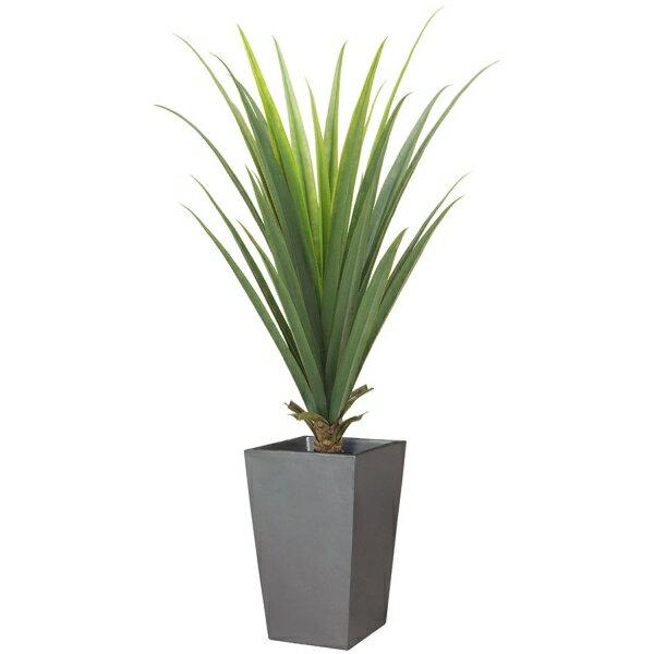 【光触媒】【送料無料】【グリーン・インテリア用観葉植物】メキシカンアロエプラント(L) x 30(プラスチック) お買い得商品