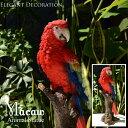 Macaw コンゴウインコ 自然の造形が美しい鳥の置物 スタンドオブジェ トリ とり インコ オウム リアル トロピカル アンティーク 雑貨 おしゃれ アニマル 動物 バード 本物そっくり 赤 レッド