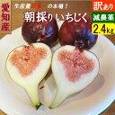 【送料無料】愛知県産 朝獲れイチジク 2.4kg(300g×8パック) 訳あり 減農薬 家庭用