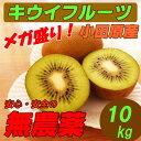 【送料無料】 国産 無農薬 キウイフルーツ 10kg グリーンキウイ ダイエット・スムージー用にも!