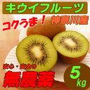 【送料無料】 国産 無農薬 キウイフルーツ 5kg グリーンキウイ ダイエット・スムージー用にも!