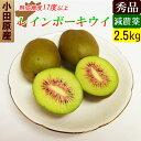 小田原産 レッドキウイ 減農薬 2.5kg レインボーレッド 希少なキウイフルーツ【送料無料】