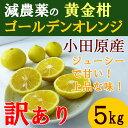 【送料無料】 神奈川産 特別栽培 ゴールデンオレンジ 黄金柑 5キロ 訳あり 規格外 減農薬