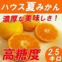 【送料無料】 ハウスみかん 2.5kg 高糖度の夏ミカン 神奈川産