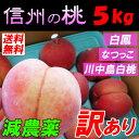 【送料無料】信州 小布施 減農薬 桃 モモ 訳あり 5kg 家庭用