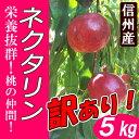 【送料無料】減農薬 ネクタリン 訳あり 5kg 規格外 ツルツル桃!B品