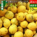 減農薬 国産レモン 訳あり 10kg 小田原産 ノーワックス 有機肥料 家庭用