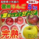 【送料無料】長野産 信州りんご 5kg お歳暮に!小布施リンゴ【サンふじ・シナノゴールド】