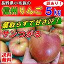 【送料無料】 長野産 小布施 有機肥料100% 訳あり  りんご サンつがる 5kg 葉とらず 小布施 規格外